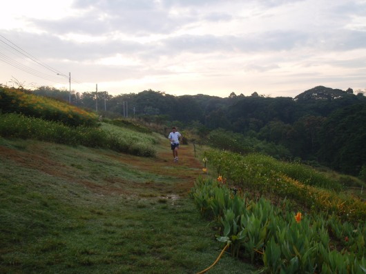 Running atop the flower terraces