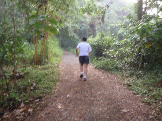 Trail near the Orchidarium