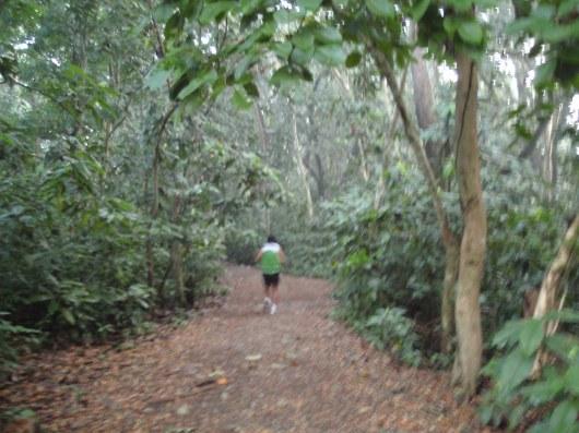 Deep inside wooded area