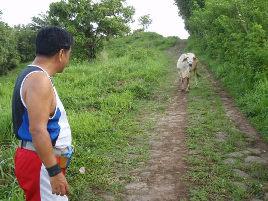 A cow quietly grazing at the left side of the trail suddenly rushes to the middle of the track and steadfastly blocks our path. We stood there for a few minutes not knowing what to do but we were prepared just in case it runs after us. After another 3 minutes, it finally leaves and lets us run in peace.