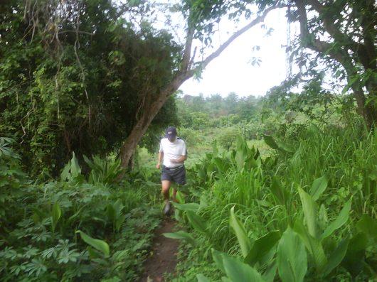 Passing thru some tuber plantations